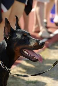 Cómo-puedes-prevenir-la-halitosis-en-tu-perro