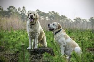 educador-canino