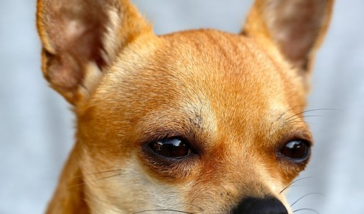 qué-se-entiende-por-un-educador-canino
